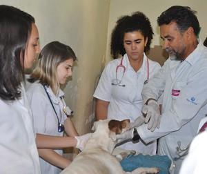Parceria entre Prefeitura de Itabirito e UFMG amplia atendimento a animais do Centro de Controle Animal
