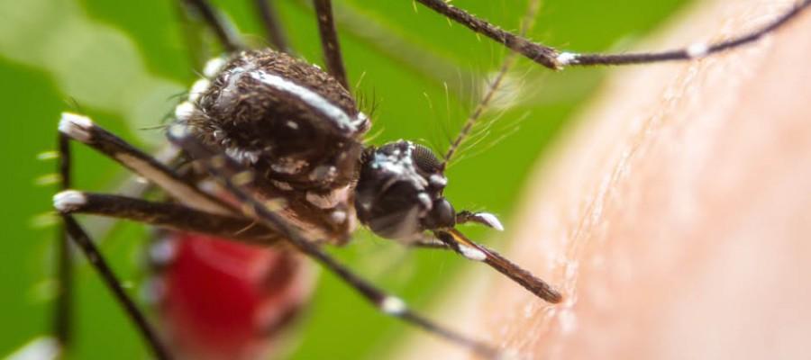 Dengue, chikungunya e zika: atualizações sobre a situação em Itabirito